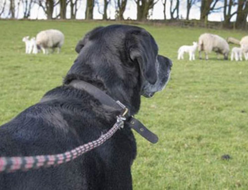 Dog owners – be careful during lambing season
