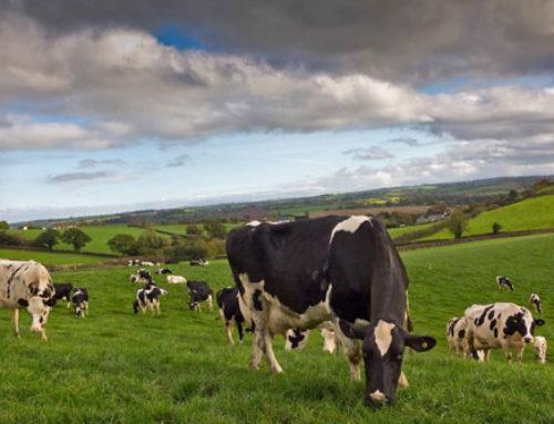 Alarming decline in farmer numbers