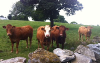 has agreed an exceptional aid fund for Irish beef farmers.