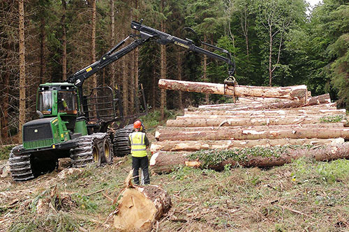CANNEY – Calls on Government to sort out supply chains issues within forestry Industry