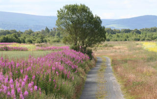 Communities asked to support Greenway through 'hidden' East Galway