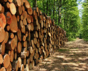 Approval given to fast track reform of forestry appeals system
