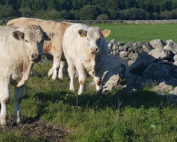 Welcomes announcement of €56 million to Galway Farmers