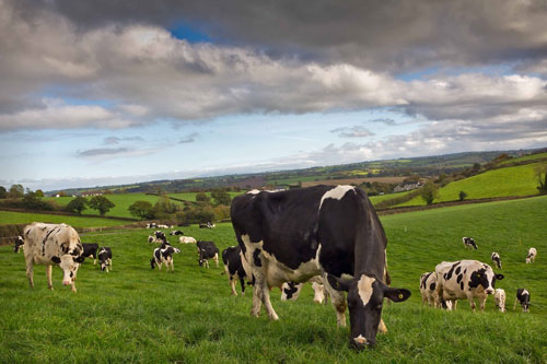 Agricultural contractors must be included in TAMS ll supports scheme