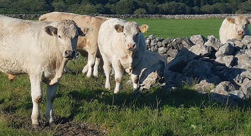 Welcome announcement of €20m of ANC payments issuing to 11,825 farmers in Galway this week